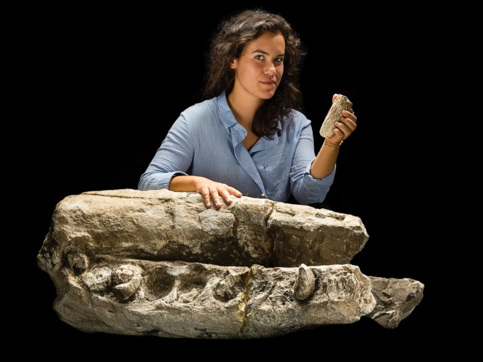 PHOTO: Research student Alex Boersma is seen with the fossil specimen of Albicetus oxymycterus, composed of the beak and lower jaws of the whale. Boersma also holds a tooth from the specimen, which is about 14-16 million years old.
