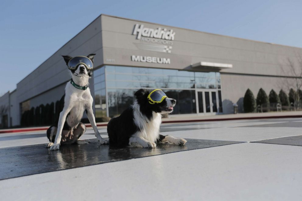 PHOTO: Bett and Greg pose wearing goggles outside of Hendrick Motorsports, one of the companies that hired the dogs to chase away geese.