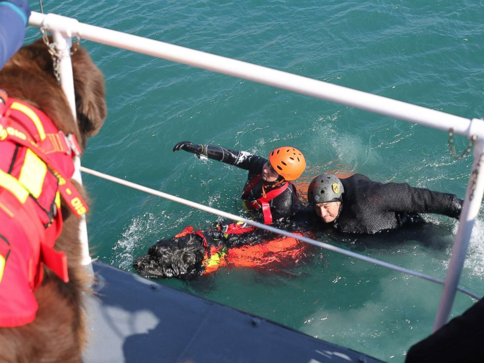 PHOTO: Handler Simonetta Andreoli and an exercise participant pictured being towed by her dog Reef.