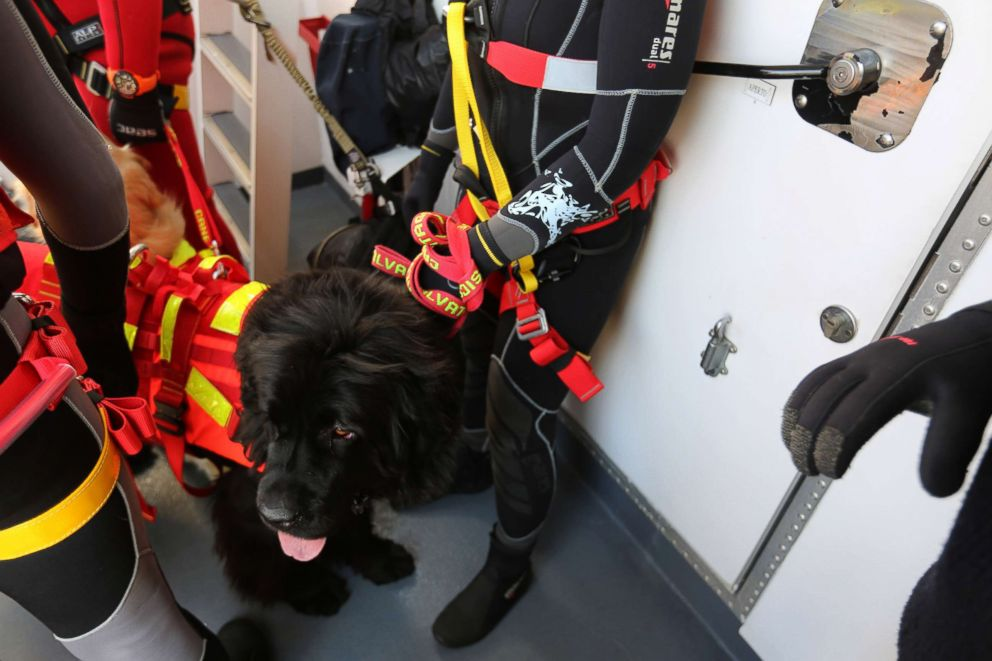 PHOTO: Reef, a licensed water rescue dog, readies to jump into the water with handler Simonetta Andreoli to practice a rescue.
