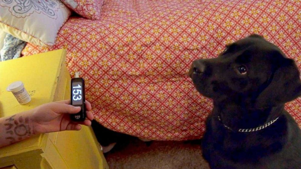 PHOTO: Eli Nichols tests his blood sugar with a meter besides his medical service dog, Einstein.