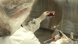 Private Cord Blood Banks: Smart Parenting or Waste of Money?