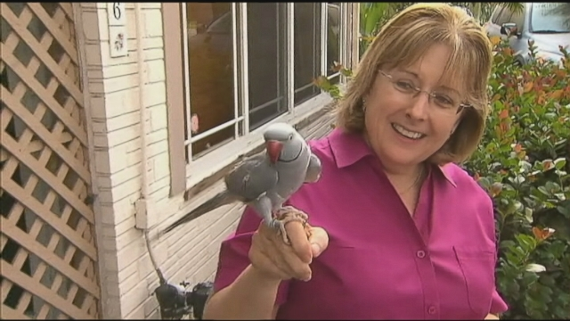 Pet Parrot Saves Family From Florida House Fire Video Abc News
