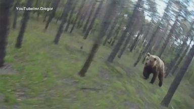 Pet Siberian Lynx Attacks Atlanta Woman Video - ABC News
