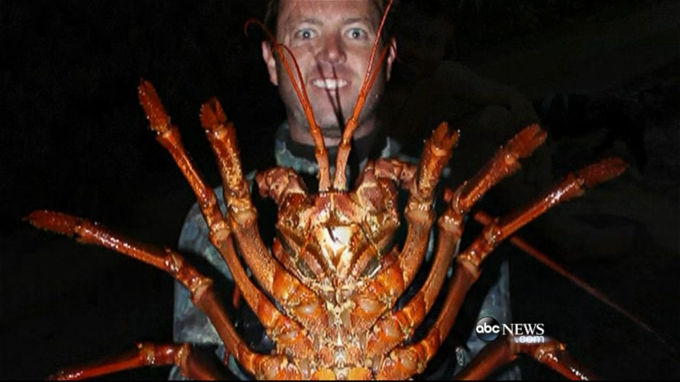 CATCH MORE LOBSTERS: Heres How
