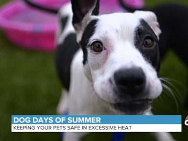 WATCH: How to keep pets safe in excessive heat