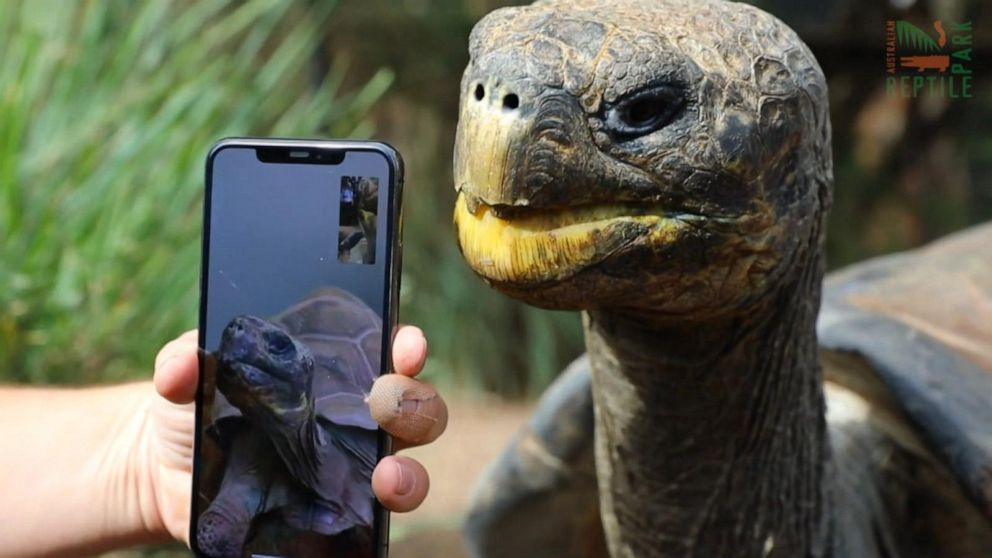 Reptile couple meets for 1st time on FaceTime