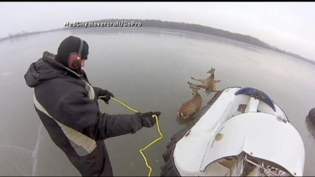 VIDEO: Instant Index: Deer Caught on Ice in Minnesota Rescued by Good Samaritans