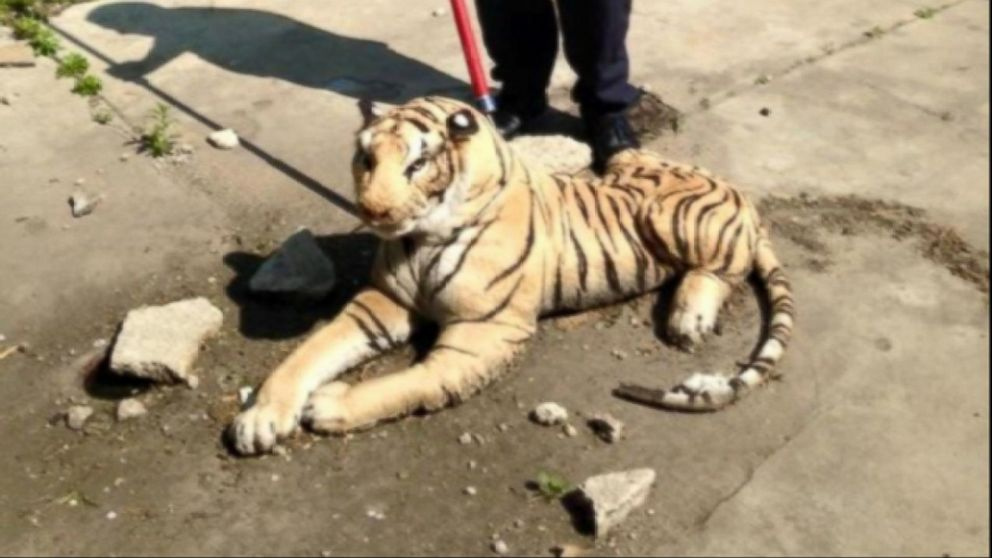 Mich. Animal Control Officer Responds to Report of Tiger in Backyard, Finds Stuffed Animal