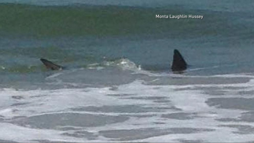 Terrifying Shark Attacks Off The Coast Of North Carolina Video Abc News
