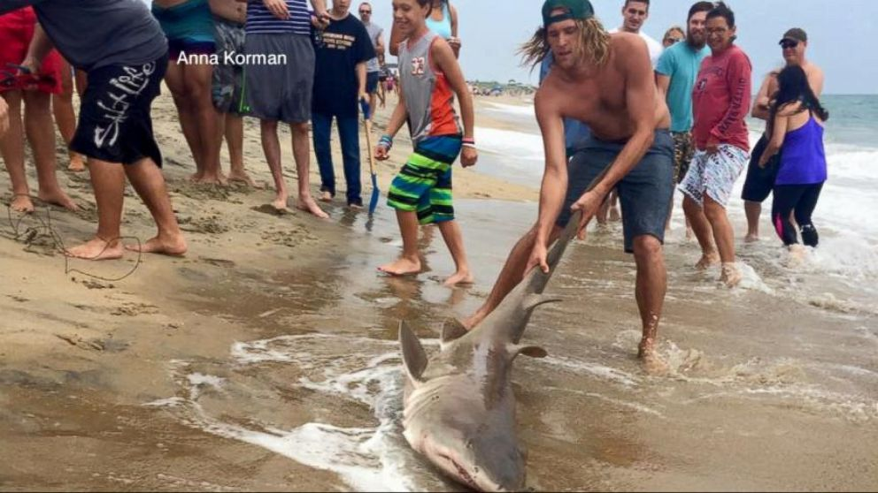 Video Shows Men Catching Shark Off Coast Of North Carolina Video Abc News