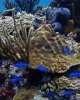 VIDEO: American scientist works to save coral reefs
