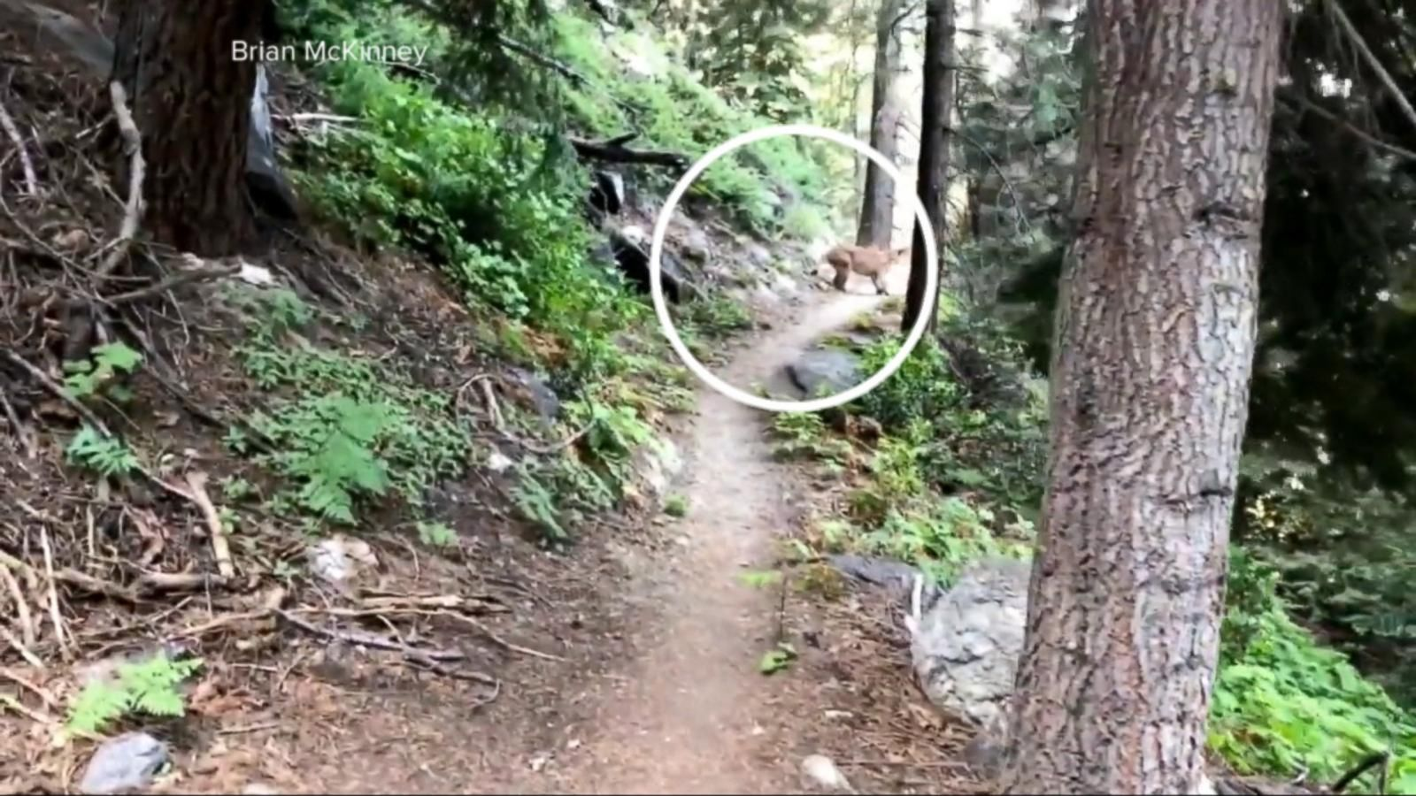 2 hikers cross paths with mountain lion at Sequoia National Park ...