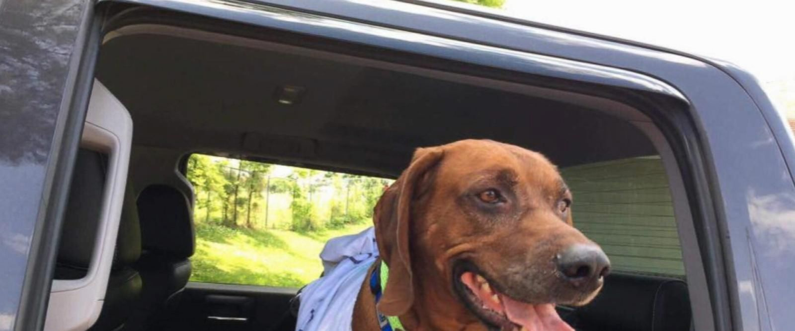 VIDEO: Volunteers drive lost dog thousands of miles to return to owner