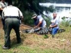 WATCH:  An alligator got this lady': 911 call captures moment of deadly attack