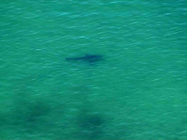 WATCH:  Suspected shark attack reported off the coast of Cape Cod