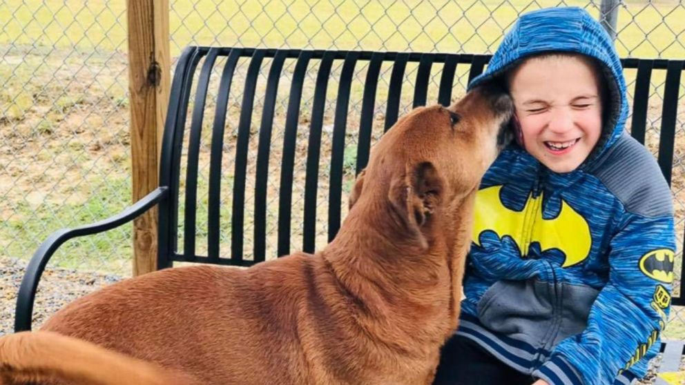7-year-old 'dog whisperer' continues mission to find loving homes