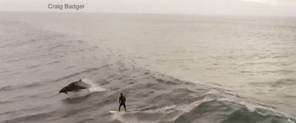 VIDEO: California man surfs with dolphins