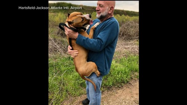 Missing show dog that escaped from cage at Atlanta airport has been found