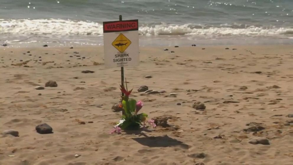 Swimmer dies from shark attack