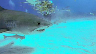 Family of 21-year-old killed by sharks in Bahamas speaks out