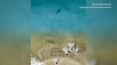 Stunning image shows shark near children in Florida surf Video - ABC