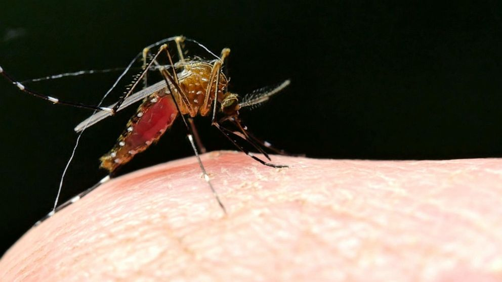 CDC confirms Indiana's first rare mosquito-borne virus death