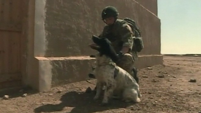 VIDEO: Bomb-sniffing dog died hours after handler Lance Cpl. Liam Tasker was killed.