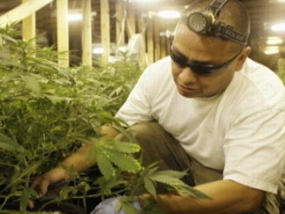 VIDEO: Pot Growers Join Union