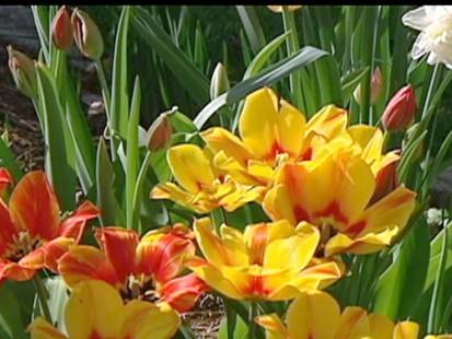 VIDEO: Taste of Summer Causes Allergy Woes