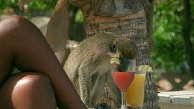 VIDEO: Researchers are teaching monkeys about the effects of heavy binge drinking.