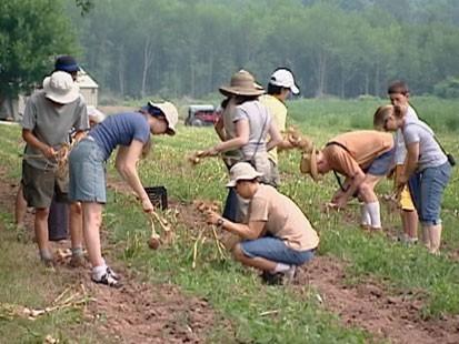 People picking vegetables