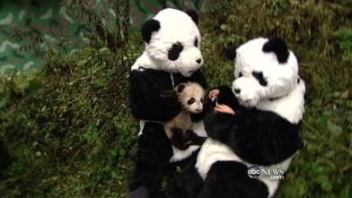 Panda suit porn
