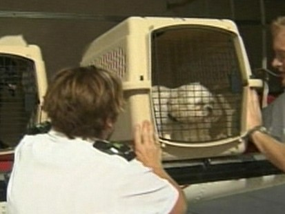Pet Travel Airlines With The Most Dog Deaths Abc News
