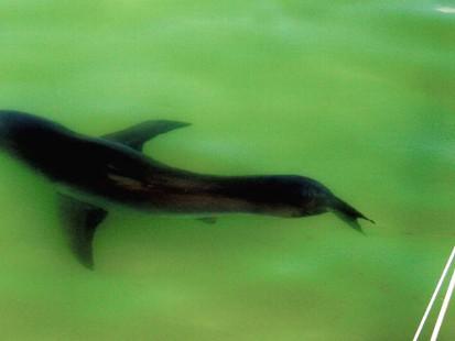 VIDEO: Shark Hunt