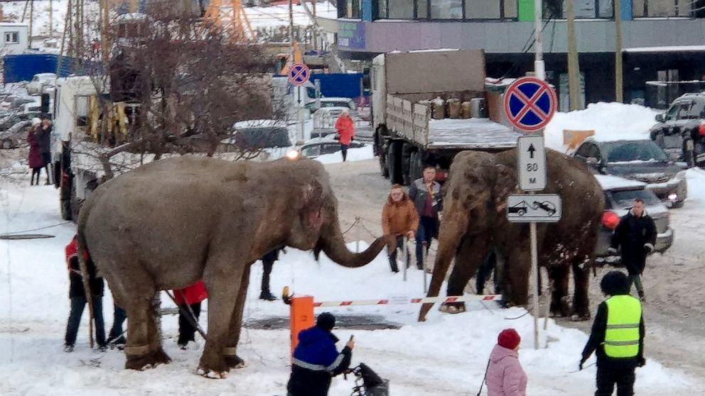 2 ελέφαντες ξεφύγουν από τσίρκο στην ρωσική πόλη