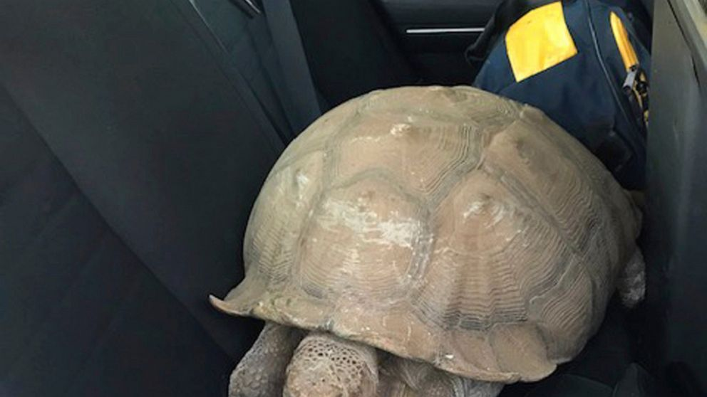 California officers reunite 250-pound tortoise with owners